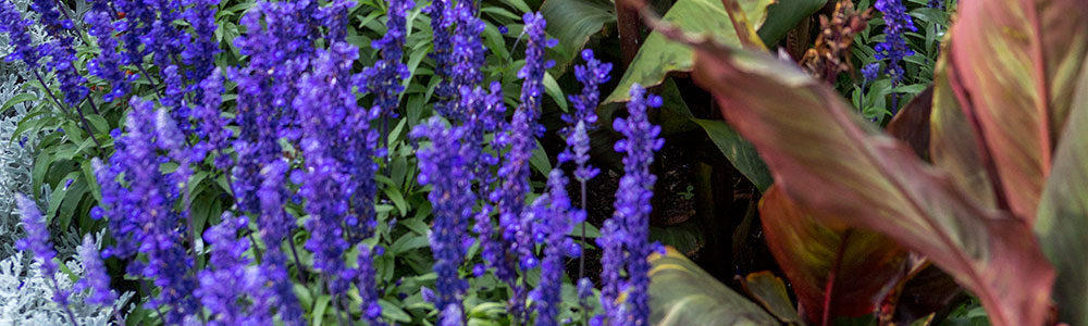 Annuals Plants and Bulbs in the Fox Cities