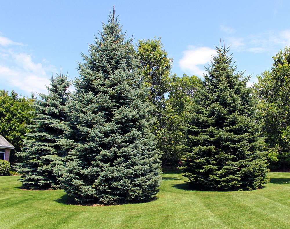 Evergreen trees and plants in appleton wi for Tree nursery