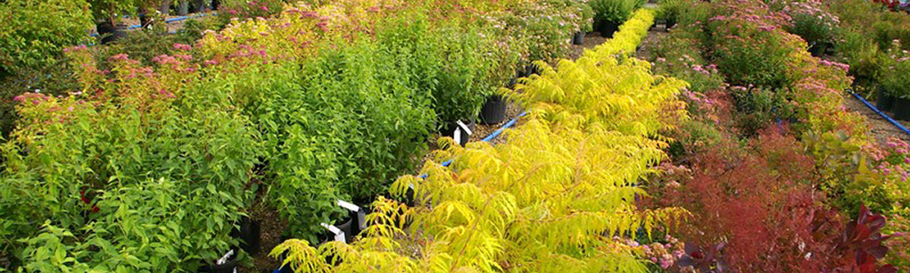 Nursery, Shrubs, and Bushes in the Fox Valley, WI