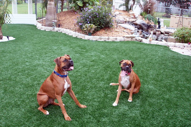 Pet Turf and Surfaces in Wisconsin
