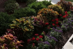 Annual Plants and Flower Bulbs in the Fox Valley, Wisconsin