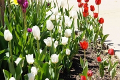 Buy Annual Plants and Flower Bulbs in the Fox Cities, WI