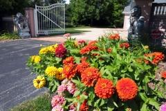 Annual Plants and Flower Bulbs near Menasha, WI