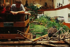 Commercial Landscaping Construction and Indoor Museum Exhibit in Wisconsin