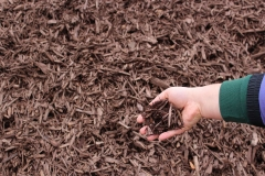Black Cherry Mulch in Appleton, WI