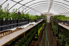 04262017-- Green House (Exports)-1