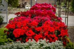 05232017-- Seasonals & Annuals-2