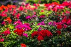09152017-- Market & Flowers (Exports)-1