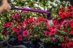 09152017-- Market & Flowers (Exports)-11