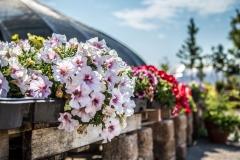 09152017-- Market & Flowers (Exports)-5