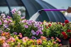 09152017-- Market & Flowers (Exports)-7