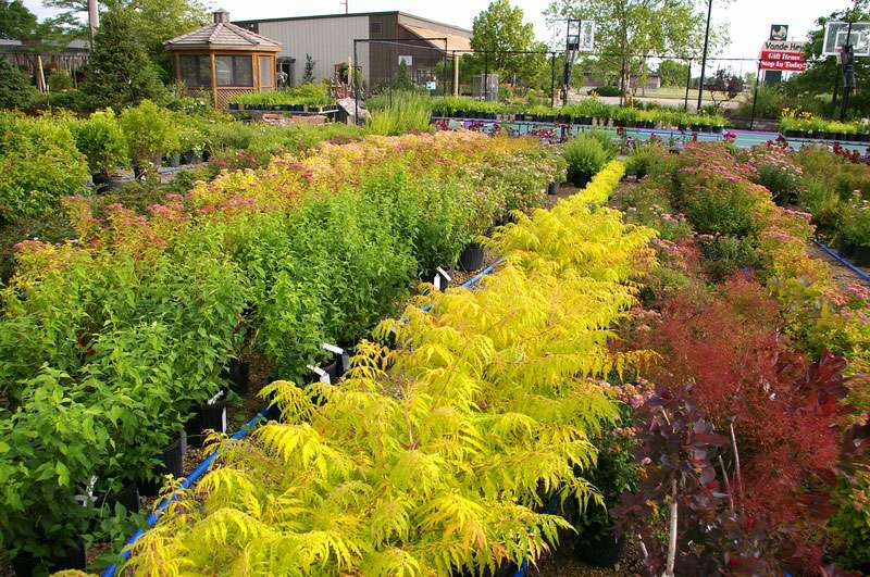shrubs and bushes for sale in appleton, wi, Natural flower