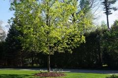 Trees at Appleton, WI Plant Nursery