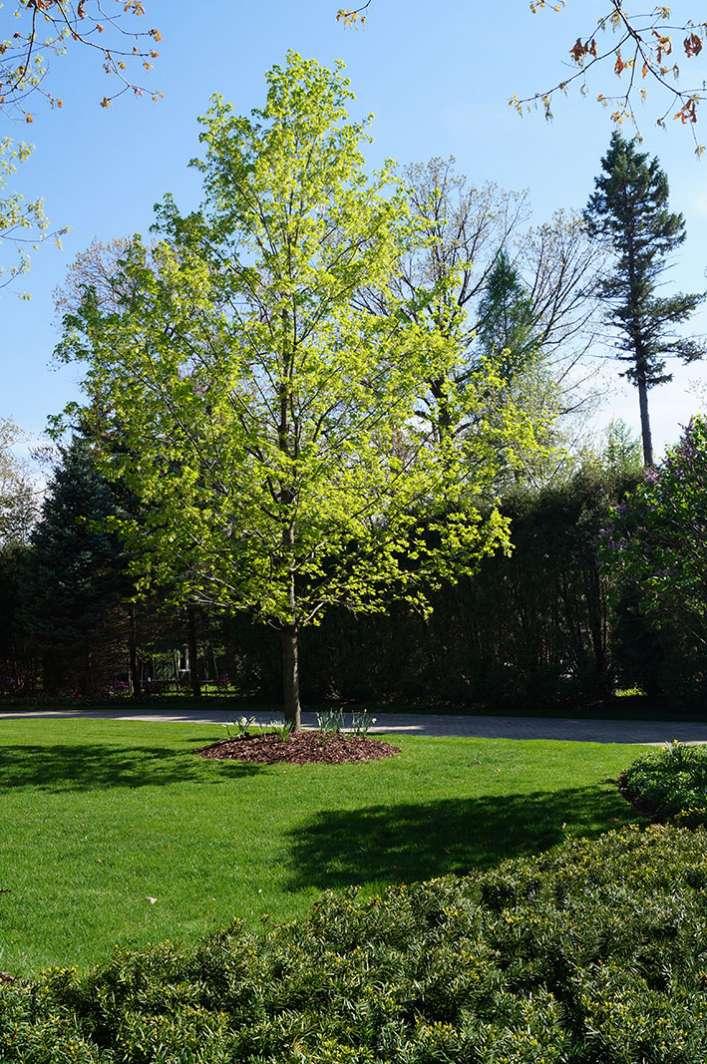 Trees At Leton Wi Plant Nursery