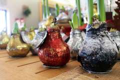 Amaryllis Bulbs and Holiday Decor in Appleton, WI