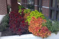Annual Plants and Flower Bulbs in Appleton, WI