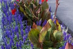 Annual Plants and Flower Bulbs near Grand Chute, WI