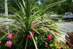 Summer Flower Arrangements in Appleton, WI