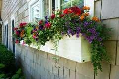 Summer Flowering Program in Appleton, WI