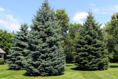 Evergreen Trees and Plants in Northeast, Wisconsin