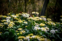 08242017-- Cabbage White Butterflies (Exports)-1