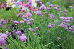 Perennials Plants from Nursery in Appleton, WI