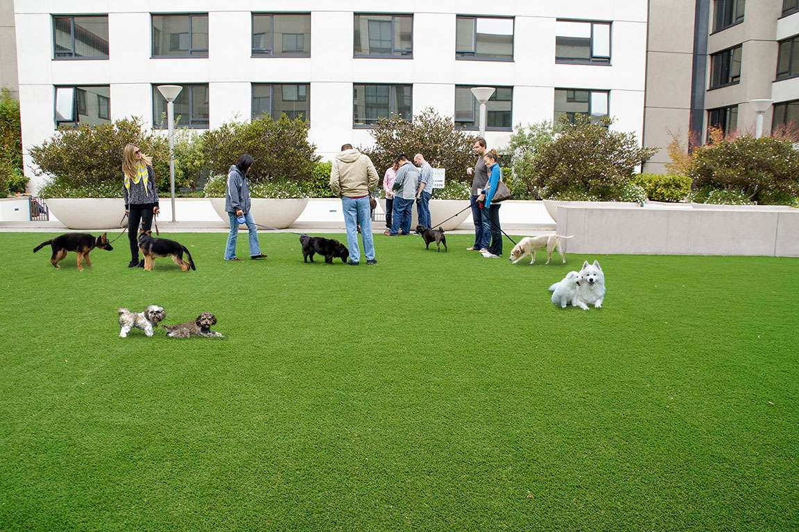 Commercial Pet Turf for Parks
