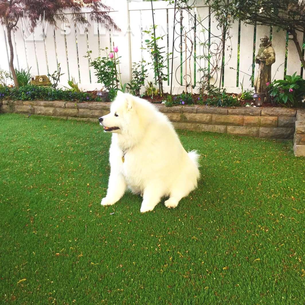 Fake Grass for Backyard Pets
