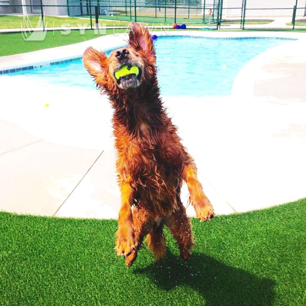 Synthetic Turf Installed for Pets