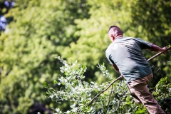 Professional Seasonal Pruning in the Fox Valley