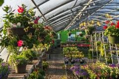 Greenhouse Near Wrightstown, WI