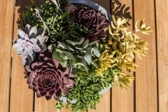 Succulent Planting Arrangement