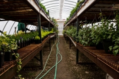 04262017-- Green House (Exports)-2