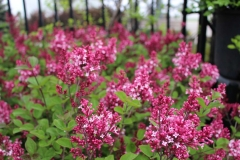 Shrubs and Bushes from Nursery in Kaukauna, WI