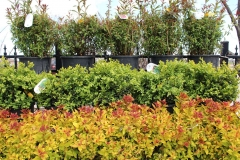 Shrubs and Bushes from Nursery in the Fox Valley