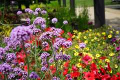 Annual and Perennial Beds in Appleton, WI