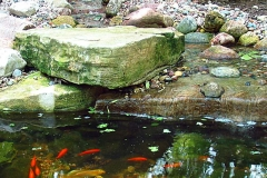 Goldfish Pond with Water Feature in Appleton, WI